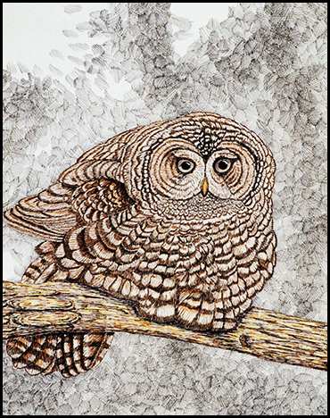 "Owl Study #1 - Colored ink on paper, 14"" x 17"", 2003"